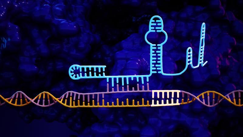 CRISPR 50-fold