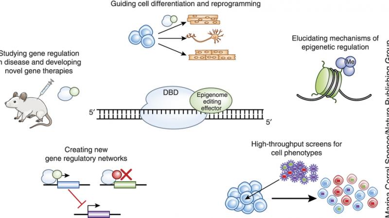 guiding cell differentiation and reprogramming
